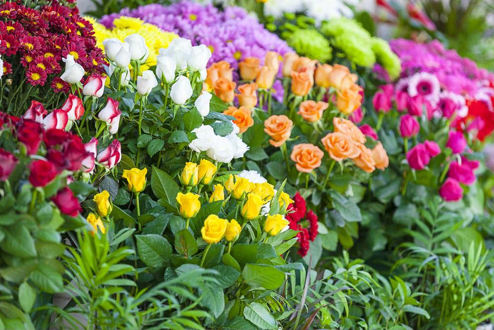 Le 10 migliori piante per fare compagnia alle rose. Dalla campanula al geranio, dalla lavanda al giglio