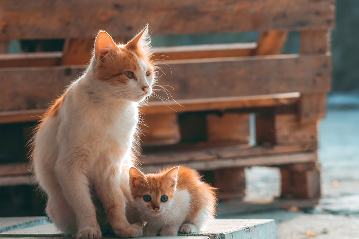 cosa fare con i gatti randagi
