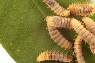 fertilizzante dalle mosche