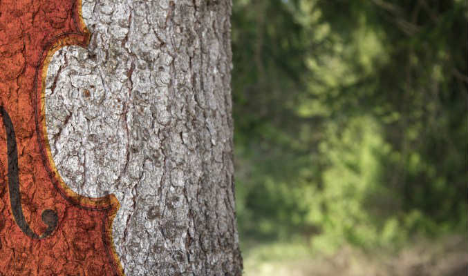 foresta stradivari crowdfunding