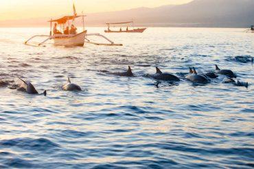 strage di delfini