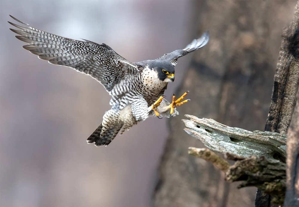 animale più velanimale più veloce del mondooce del mondo