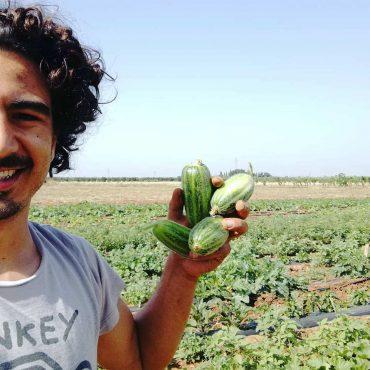 frutta e verdura gratis