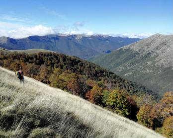 Half Earth: una sfida ecologica, ma innanzitutto etica per la protezione e il ripristino degli habitat naturali