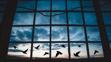 grattacieli con vetrate bird friendly