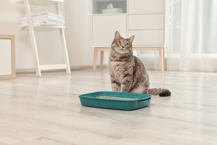 come comunicare con i gatti