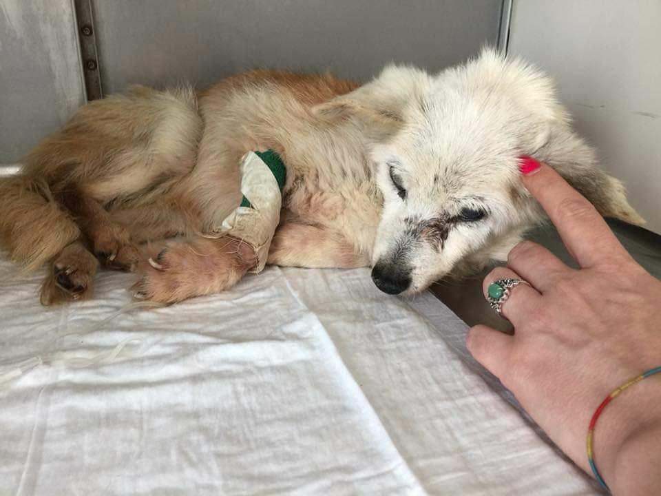adottare cani malati e disabili