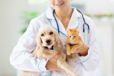 petizione per gli animali in ospedale