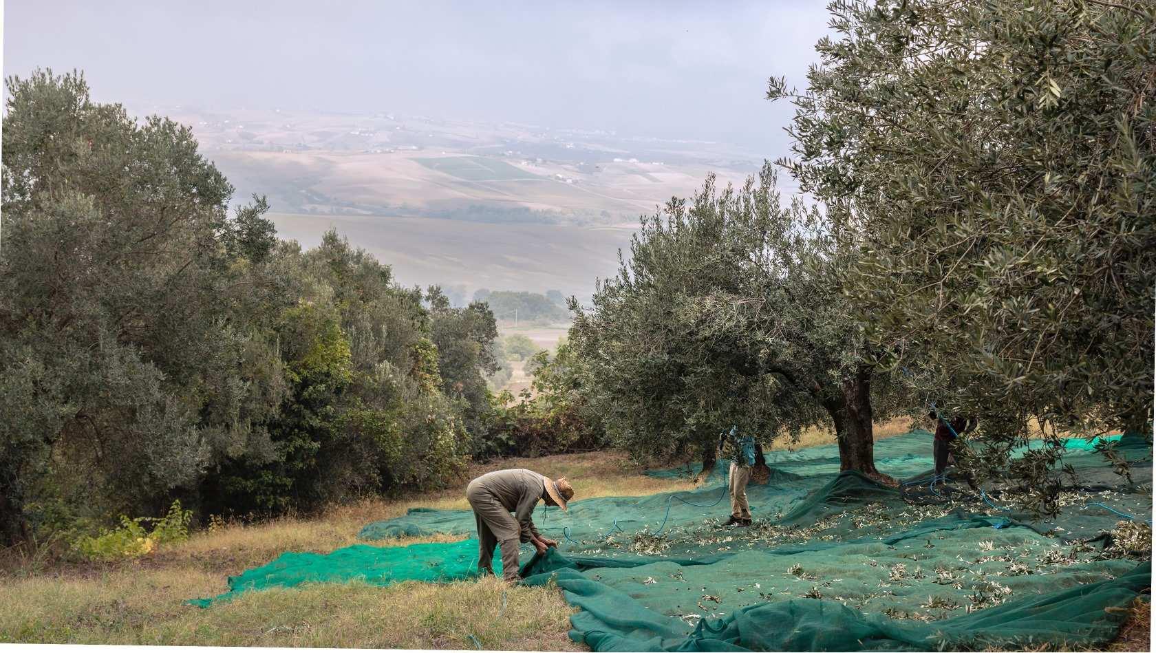 """""""Coltivatori di emozioni"""", la piattaforma tutta italiana per adottare un contadino a distanza."""