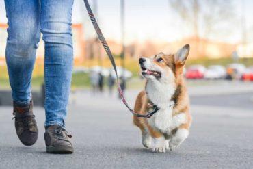 obbligo di portare il cane fuori germania
