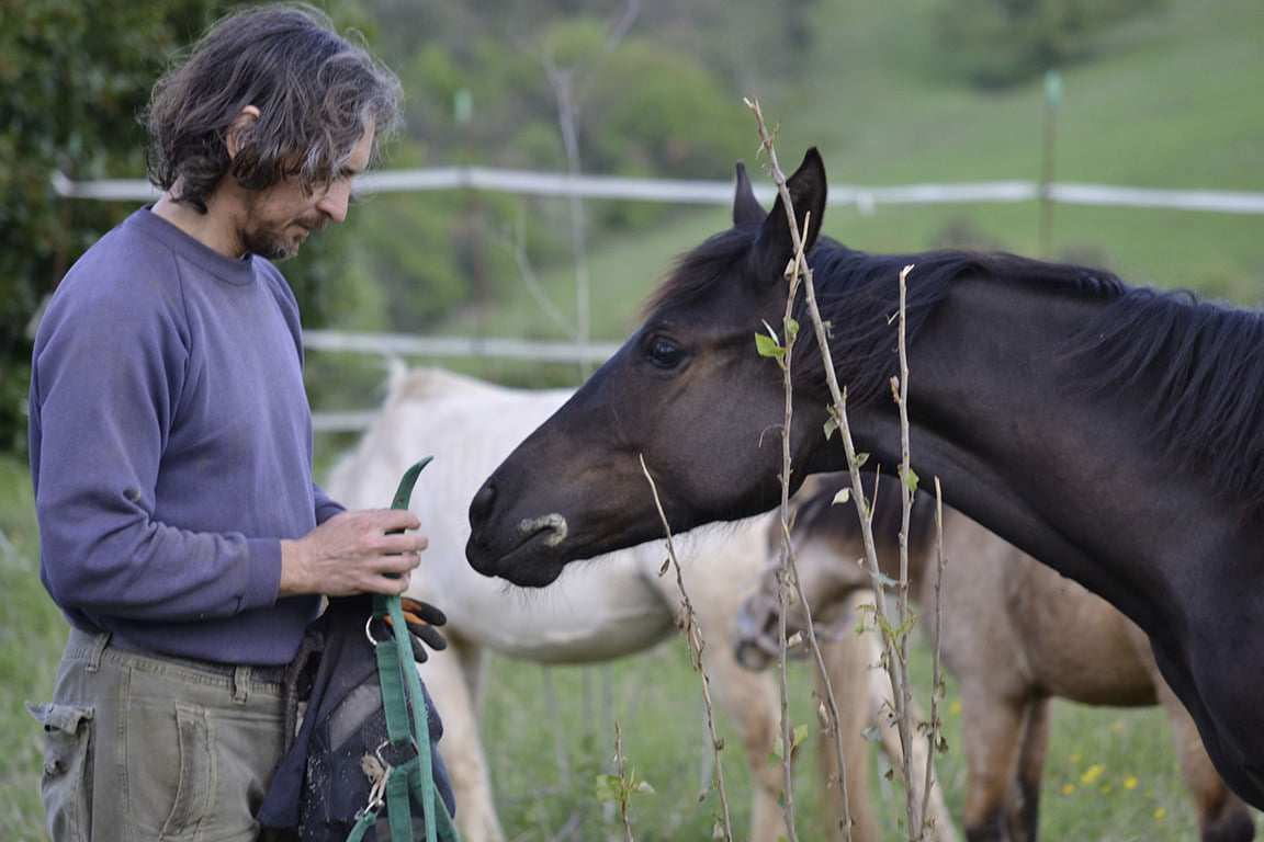 ITALIAN HORSE PROTECTION