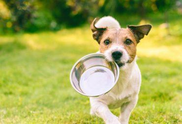 alimenti da non dare al cane