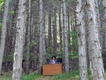 il sindaco degli alberi