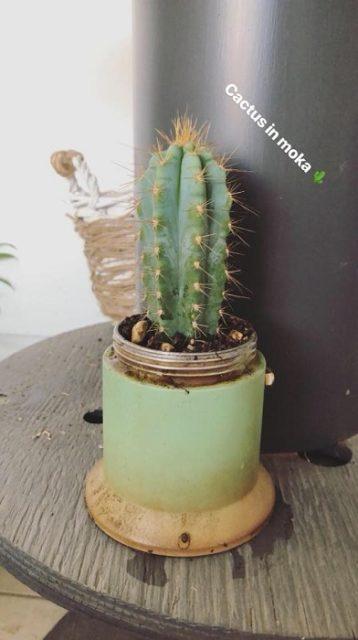 Moka con cactus
