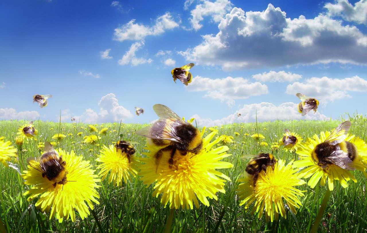 progetto pollinaction