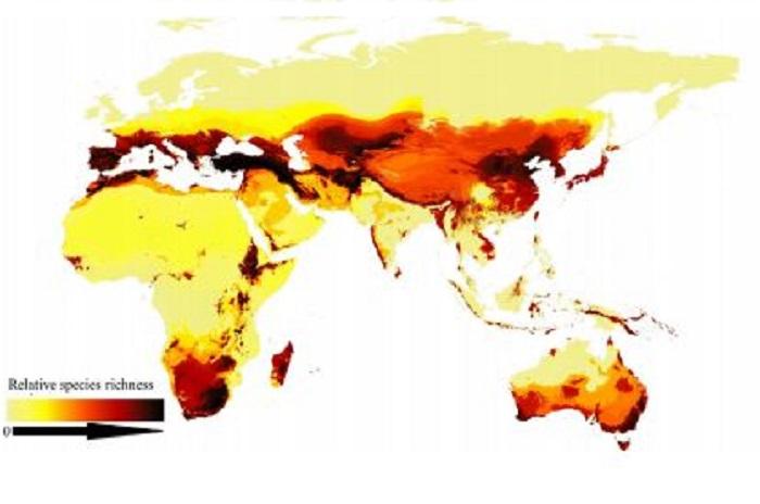 Mappa mondiale api