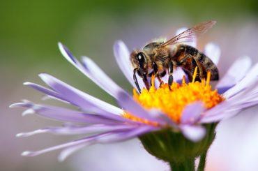 Mappa mondiale delle api