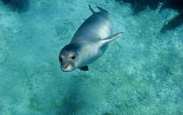 foca monaca salento