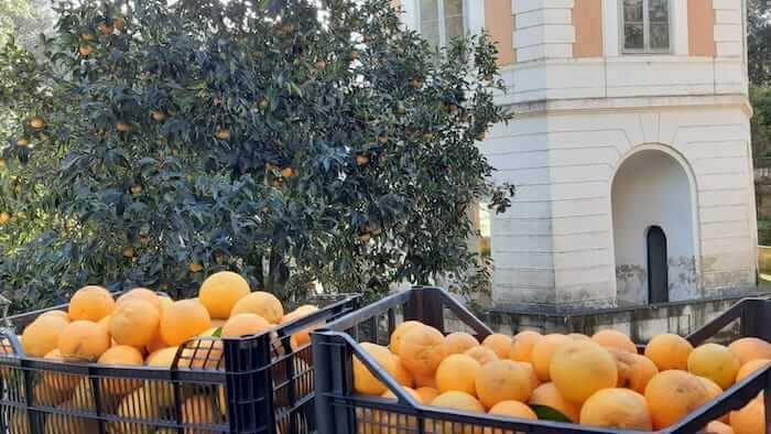 le arance della reggia di caserta diventano marmellate