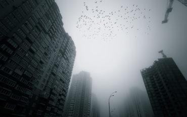 Inquinamento acustico danni animali
