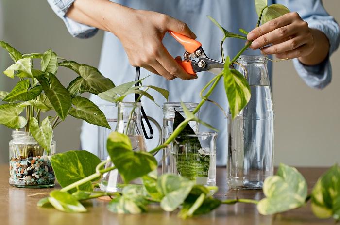 Talea, i segreti della tecnica di coltivazione che consente di non sprecare nulla