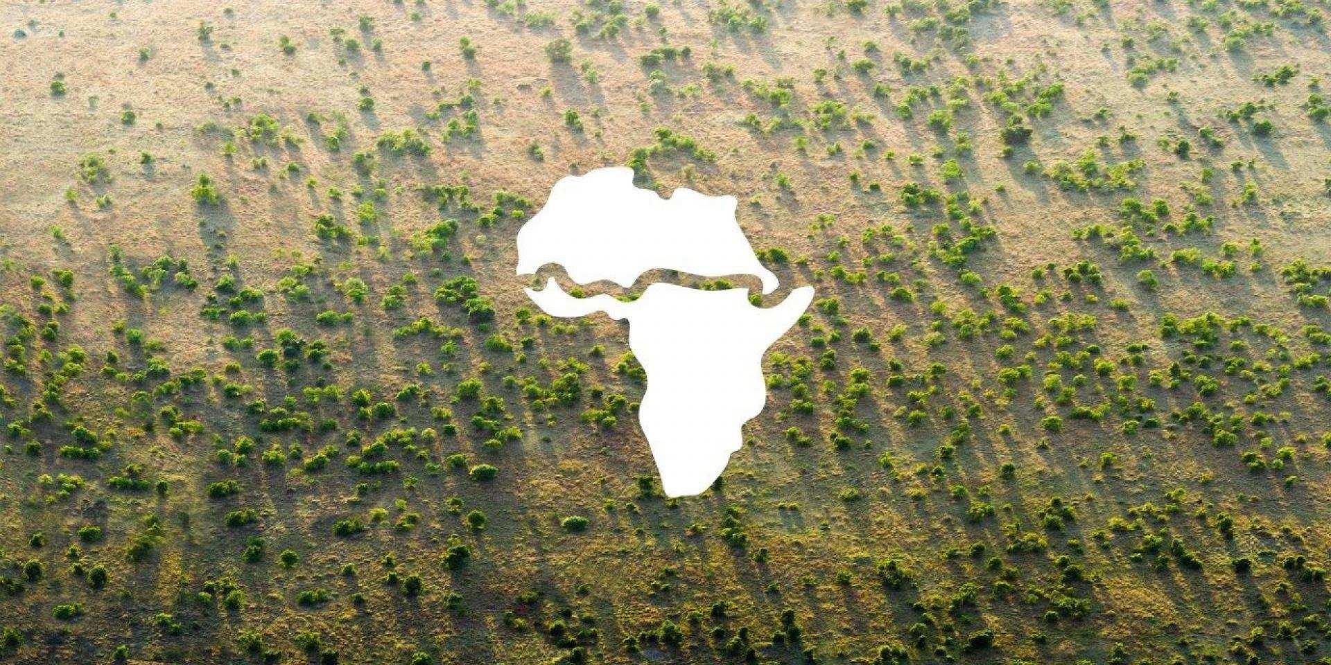 Africa: una muraglia verde per fermare il deserto che avanza