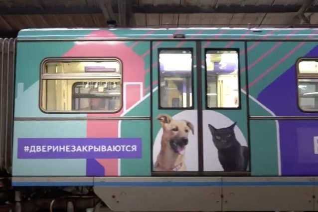 metro per cani e gatti mosca