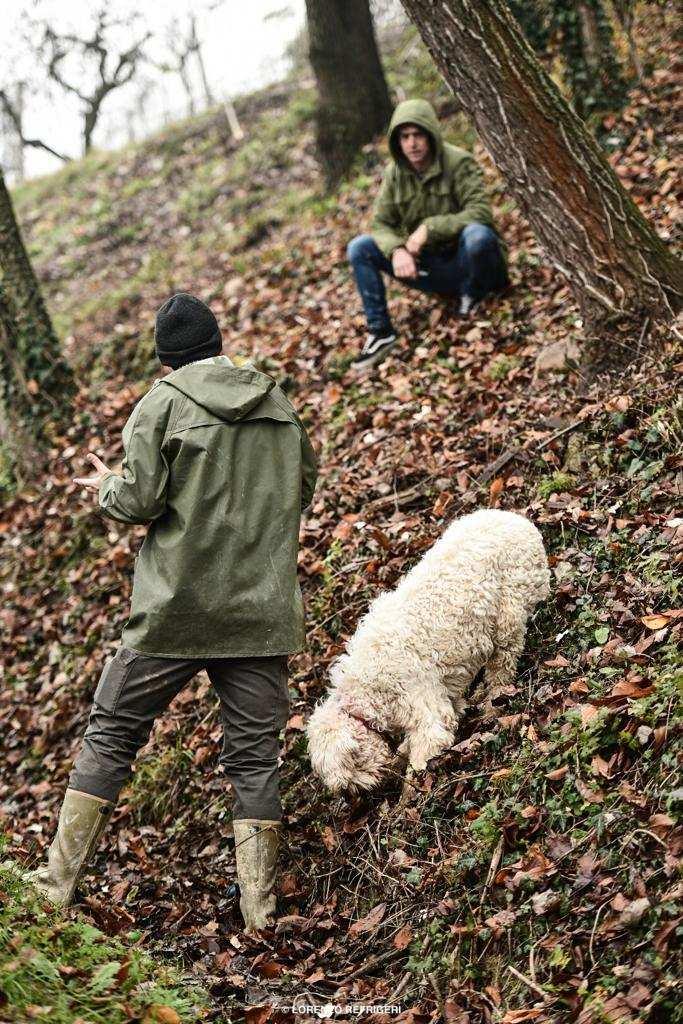 progetto save the truffle