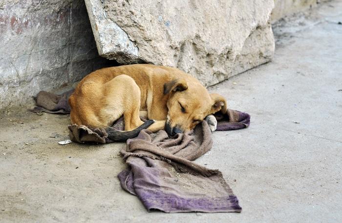 Cosa fare in caso di animali abbandonati