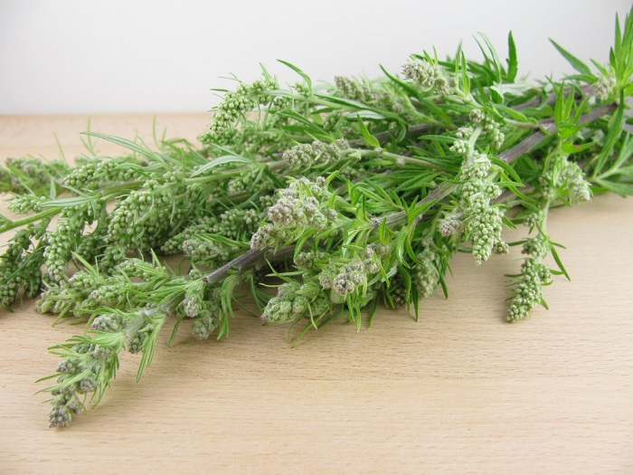 artemisia coltivazione e ricette