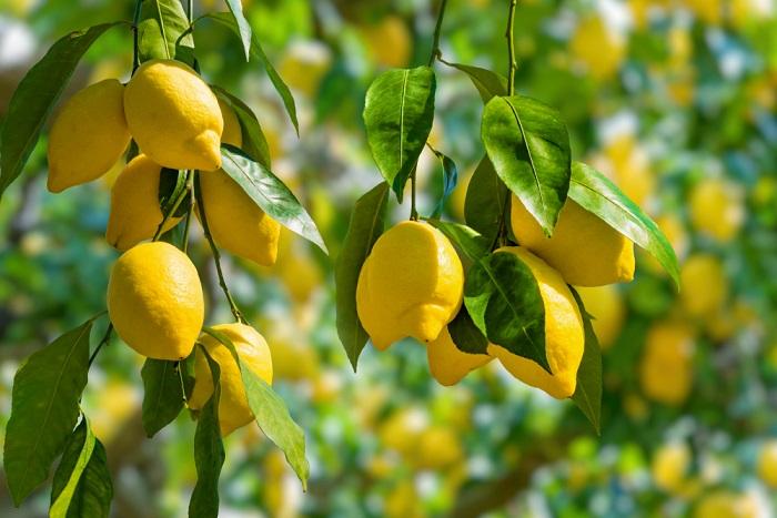 idee per utilizzare le foglie di limoni