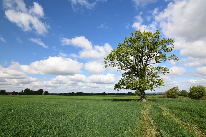 Perché piantare alberi, 10 motivi per averli sempre e ovunque a portata di mano