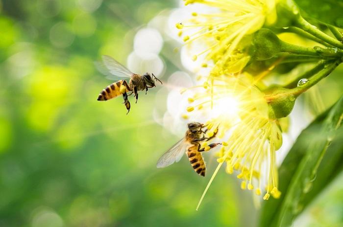 comuni amici delle api
